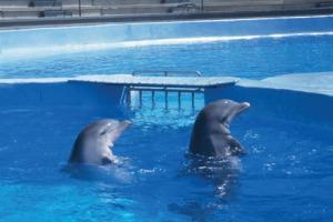 captivity12