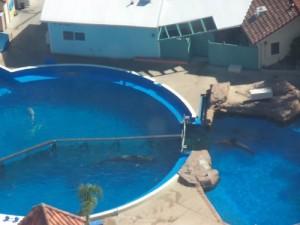 holding-pools