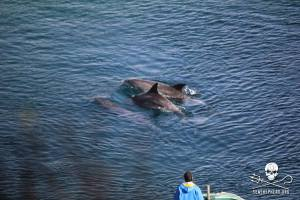 Journey to Taiji: First 2 days, first 2 slaughters #tweet4taiji