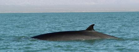 Fin_Whale_Hero_and_Circle_Image_107654