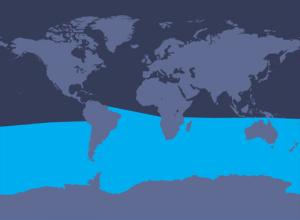 map_antarcticminke_w